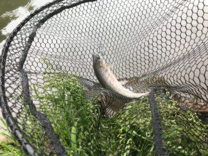 シュモークで釣ったニジマス